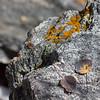 Aspen Leaves, Granite Rock, and Lichens
