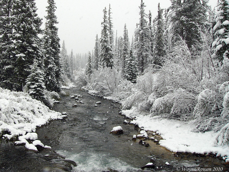 Lake Fork of the Gunnison in Snow