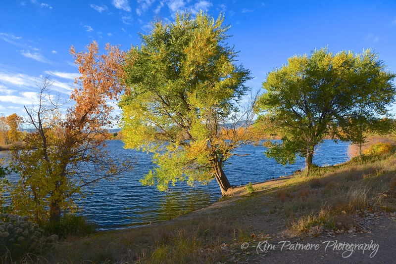 South Platte - Leaning Tree