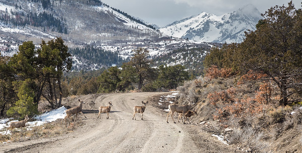 San Juan Deer Crossing