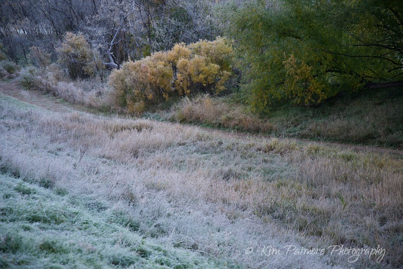 Morning Frost, Dekoevend Park, Colorado