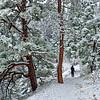 Mesa Trail in winter