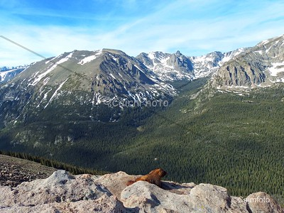 Marmot with a view.