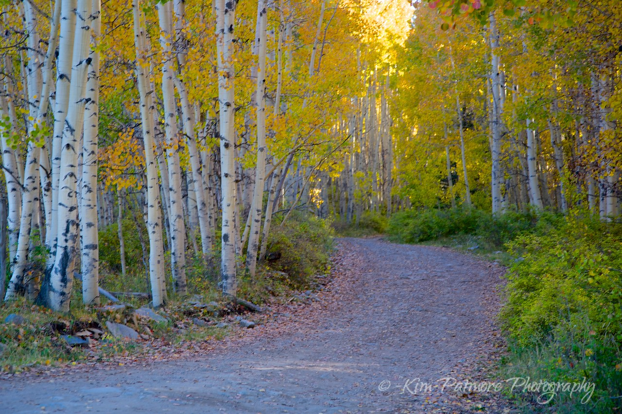 Aspen-Lined Path