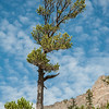 A tree reaches for the sky in Rocky Mountain National Park.