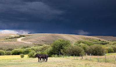 Horses Standing Together Under Dark Skies