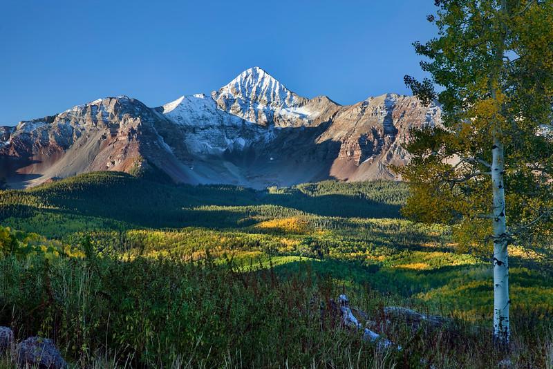 Wilson Peak and Aspen Tree