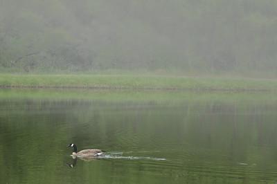 Goose n Fog  - Fort Collins