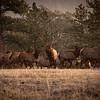 Elk Flurry