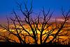 """Sunset Through Bush"""