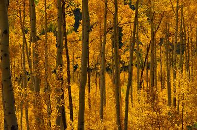 Roaring Fork Canyon