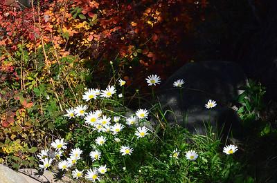 Flowers near Minturn