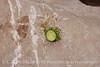 Dandelion left by chipmunk