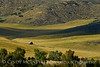 Pastoral view, Hayden, CO (4)