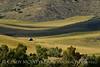 Pastoral view, Hayden, CO (2)