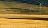 Sandhill cranes and power lines, Hayden CO (2)