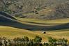 Pastoral view, Hayden, CO (1)