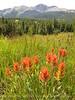 Colorado Trail at Little Molas Lake (2)
