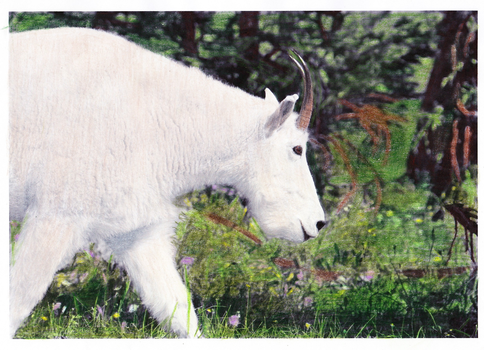 A mountain goat grazing in a field of wildflowers