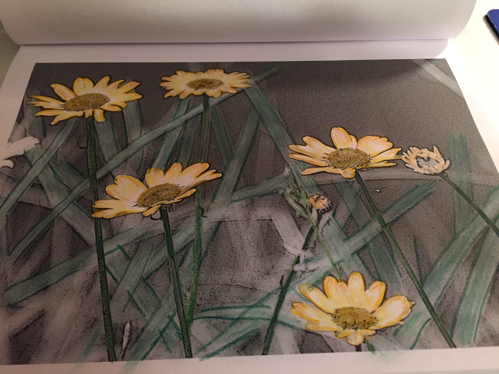 Color Montana wildflowers in our downloadable coloring pages.