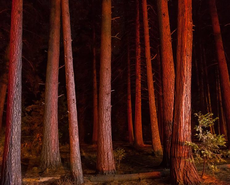 Yosemite -4319
