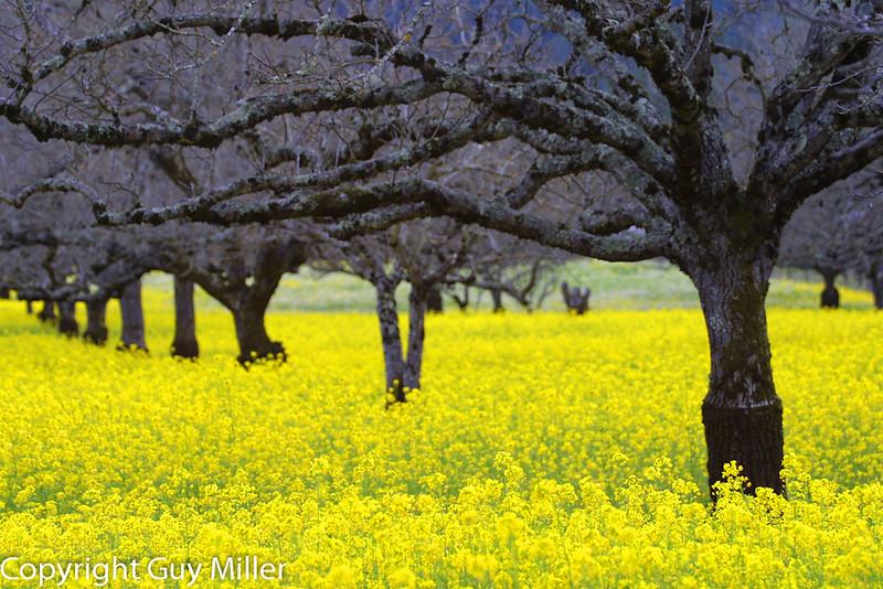 Mustard & Trees1