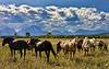 Horses, Grand Teton National Park