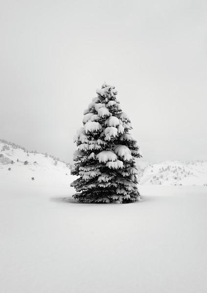 Tranquil Snow