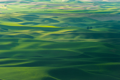 The Palouse, literally a sea of green