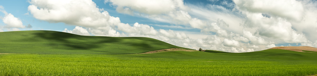 Panorama of Palouse wheat fields