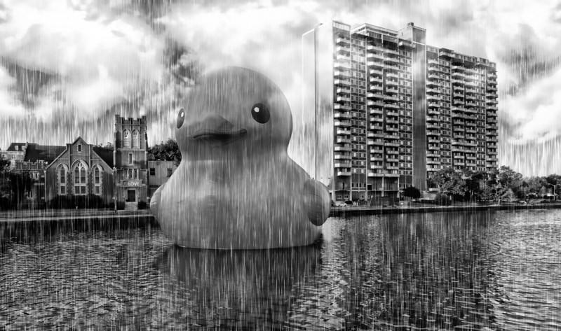 Rubber Duck in the Rain