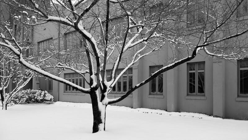 Tree at Freemason Baptist Church