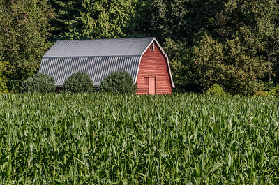 Red Barn and Cornfield