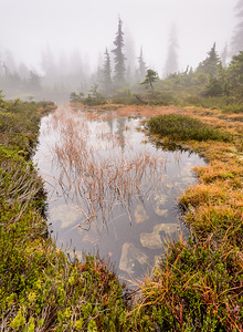 Foggy Hollyburn Pond
