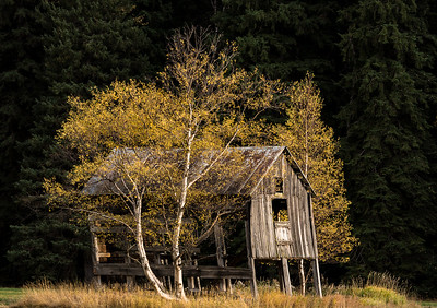 Barn and Fall Trees