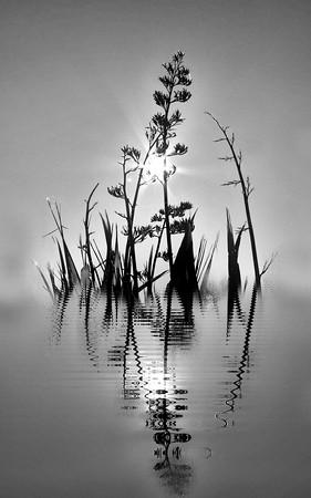 Swamped (monochrome)