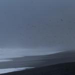 Birdlings Storm 2