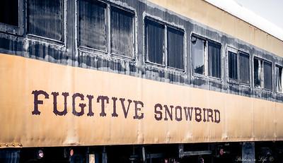 Fugitive Snowbird