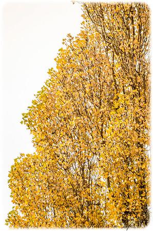 Welcome Autumn II