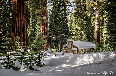 "In 1857 Galen Clark discovered the giant sequoias in Mariposa Groves.  Mr. Clark persuaded President Lincoln to sign the Yosemite Grant protecting the groves as well as Yosemite Valley, and was therefore known for many years as the ""Guardian of the Valley"".  This was the cabin Mr. Clark built to reside in amongst the breathtaking giant sequoia grove."