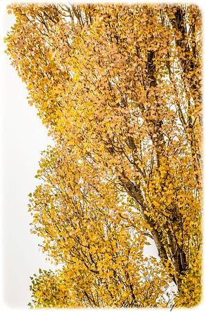 Welcome Autumn I