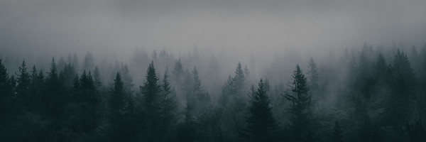 Buntzen Lake Trees 5