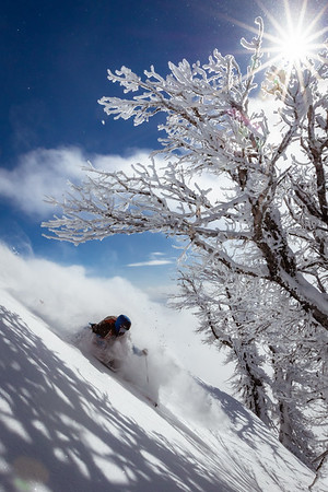 Riis Wilbrecht turning under frosted trees on Teton Pass.