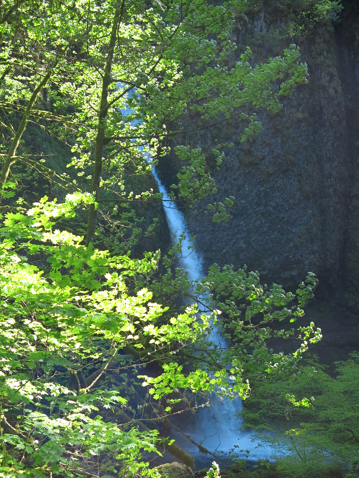 First view of Ponytail Falls