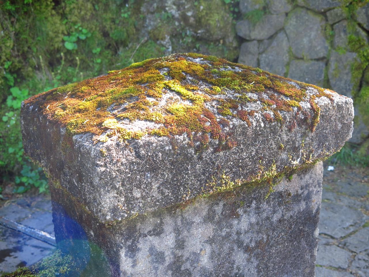 Muticolored Moss