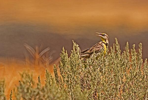 Columbia National Wildlife Refuge, 7-8-16