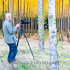 Boardman Poplars Oct 2013 -8831