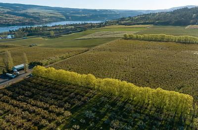 Columbia Gorge Orchards in Spring