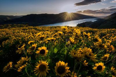 Rowena Sunrise