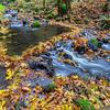 A Leafy Dam